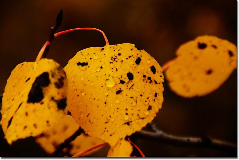 Fall colors, Kenosha Pass (6)