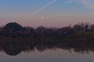 Afternoon moon / Luna de tarde
