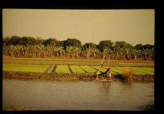 東ベンガル州 ボロ季稲の潅漑