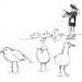 A Visit to San Francisco Feeding Gulls by VHein
