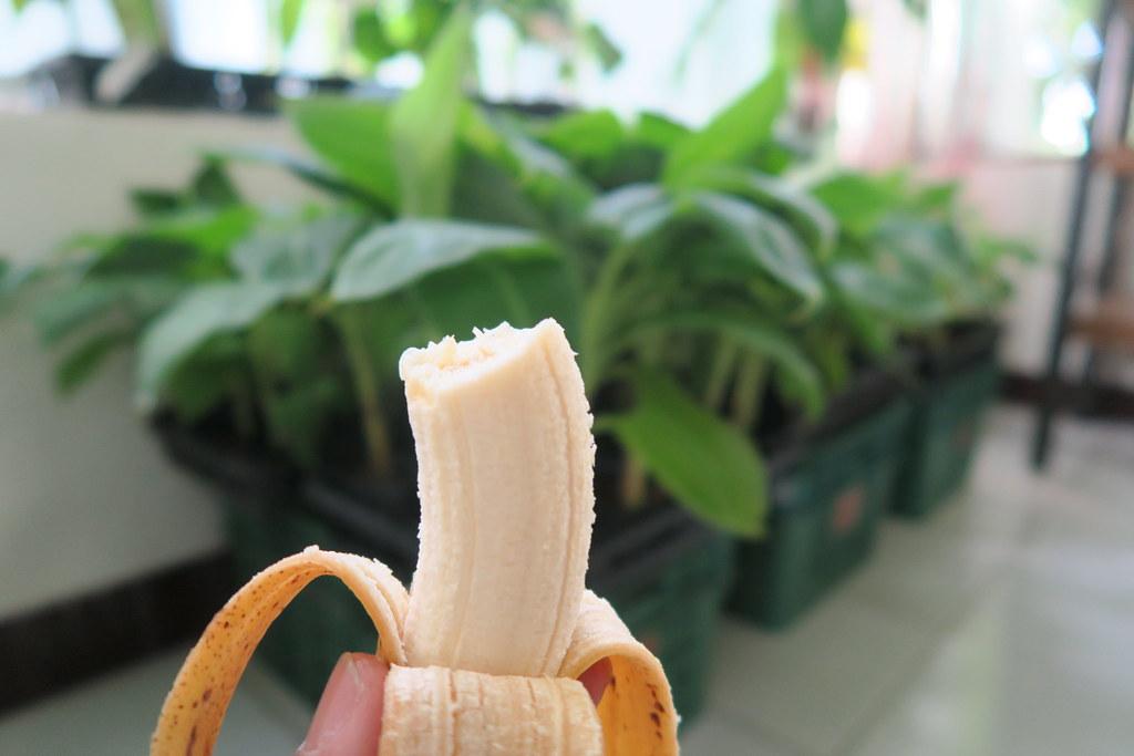 台灣香蕉科技園區 (14)
