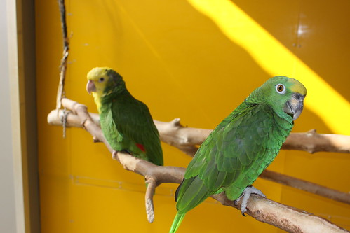 Papageiencafé in Bochum