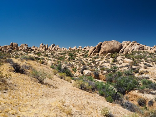Joshua Tree National Park