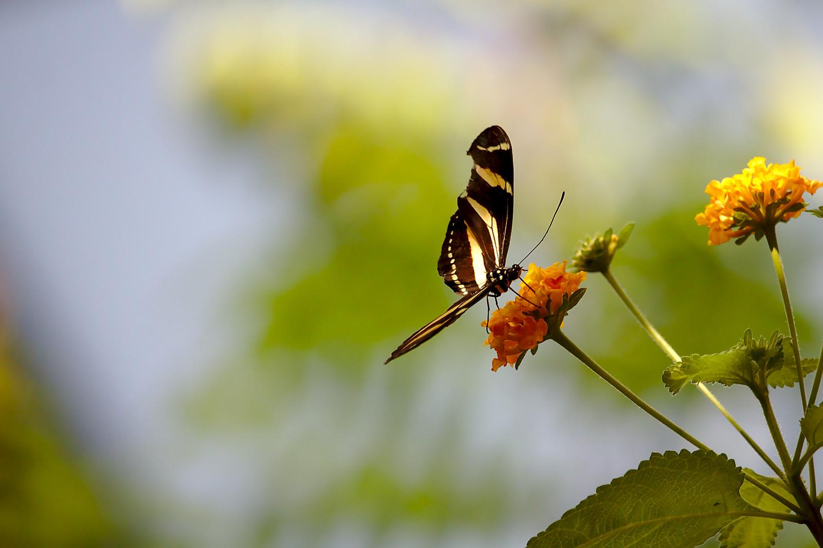 Butterfly at Tiergarten Schönbrunn