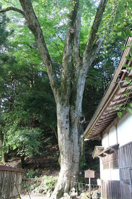 niukawakami_simo011