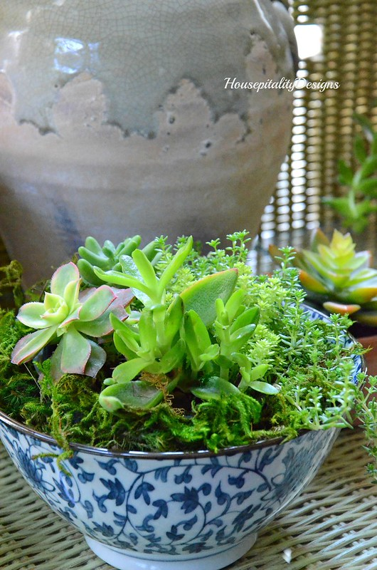 Succulents-Blue and White-Housepitality Designs