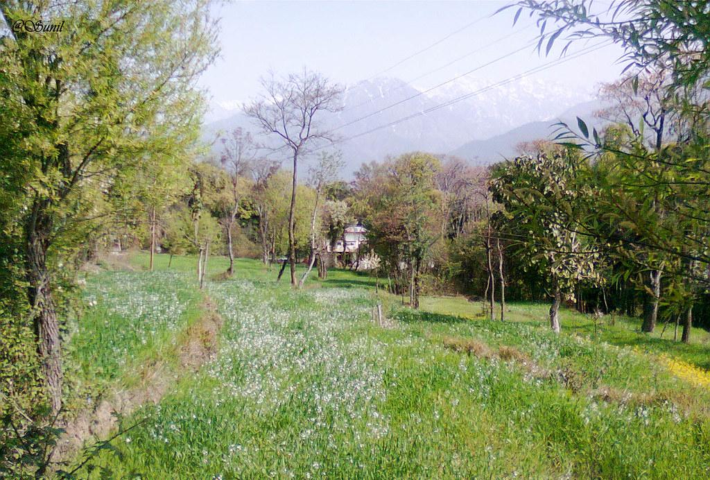 Photo1052 (2)