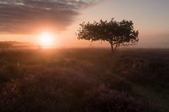 Morning Roydon