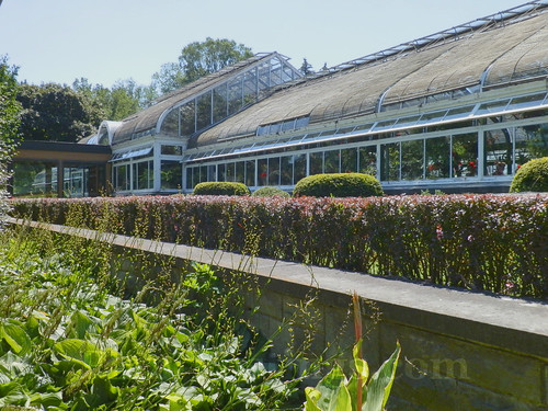 np greenhouse
