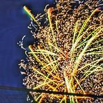 National Fireworks Association Convention, NOTE: shock waves visible
