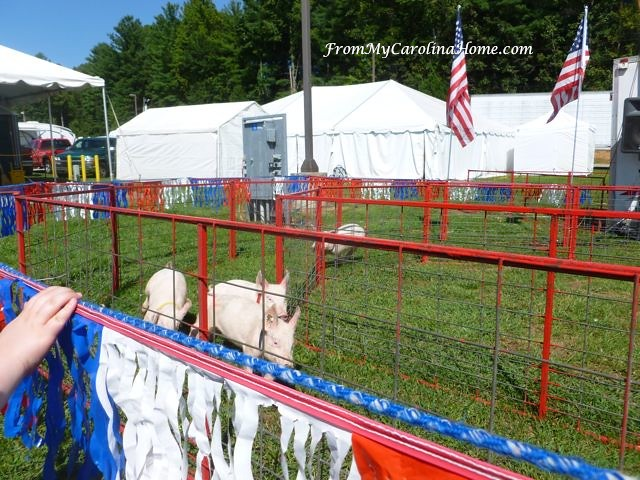 NC Mountain State Fair 2017 at From My Carolina Home