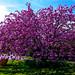 Spring blossom...