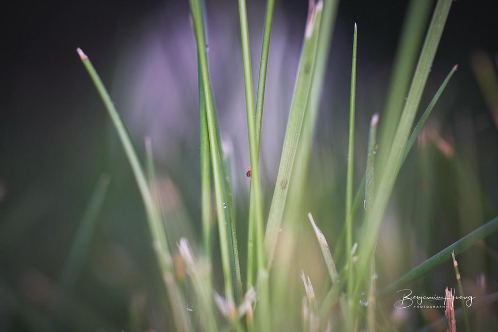 Grass Creature