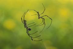 Spiders, Ladybirds et al.