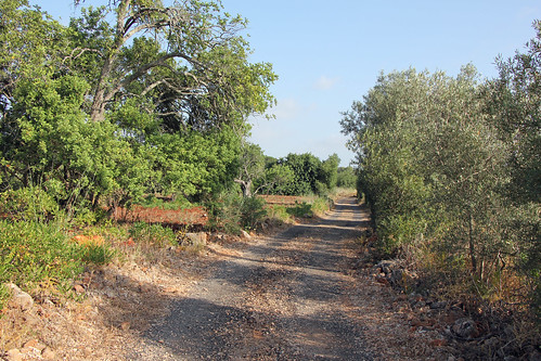 rural road in Algarve