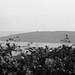 Ynys Seriol/Puffin Island by steveandthedogs