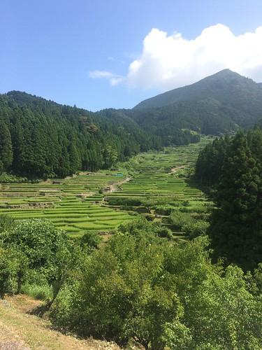 Terraced Paddy Field in Yotsuya