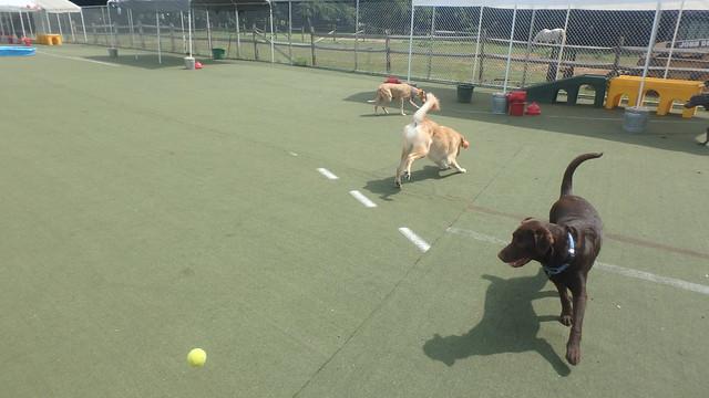 08/16/17 Baseball Fetch :D