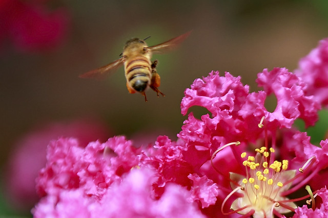 Honeybee Take off to New York