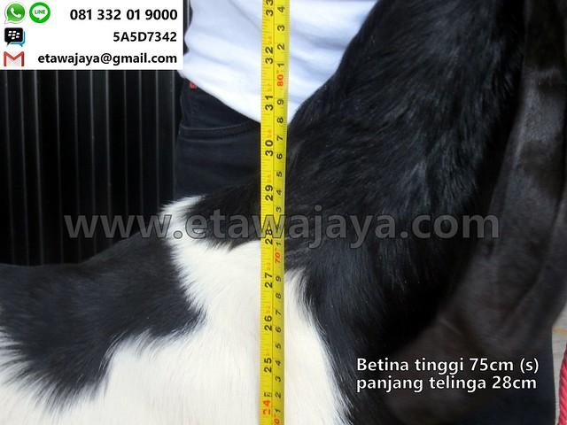 betina-75cm-s-13