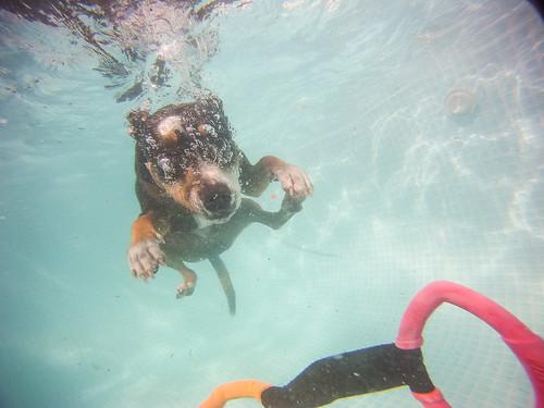 Pool-4532