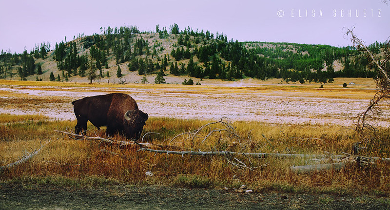 Yellowstone_by_ems (16)