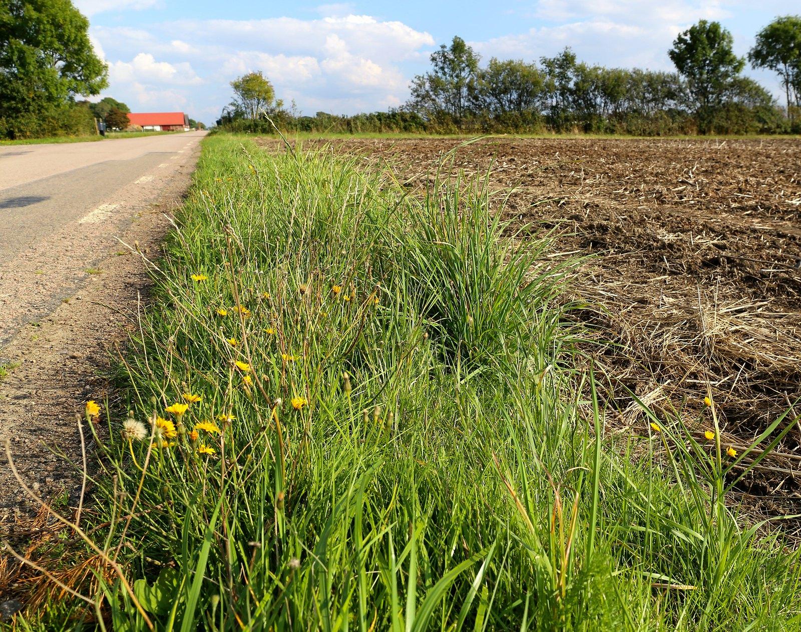 road_pixabay.com