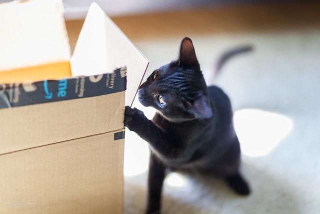 Exploring an Amazon Prime box