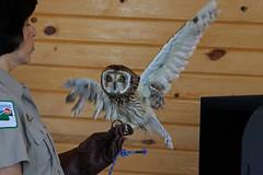 Owl LMP7B