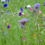 Meadow at Moor Park, Preston