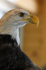 Eagle LMP3B