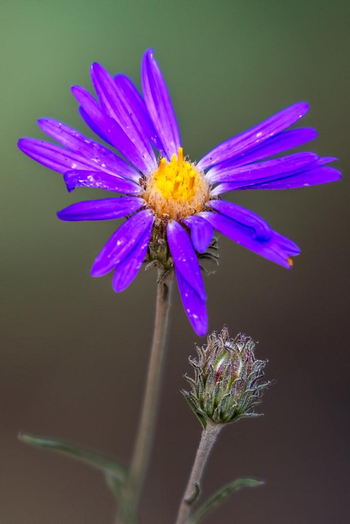 Wild-Flowers-66-7D2-090717