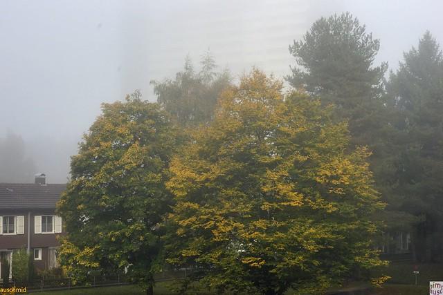 Verfärbung & Nebel