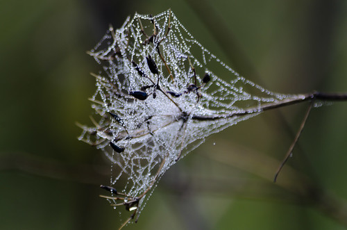Cobweb after rain