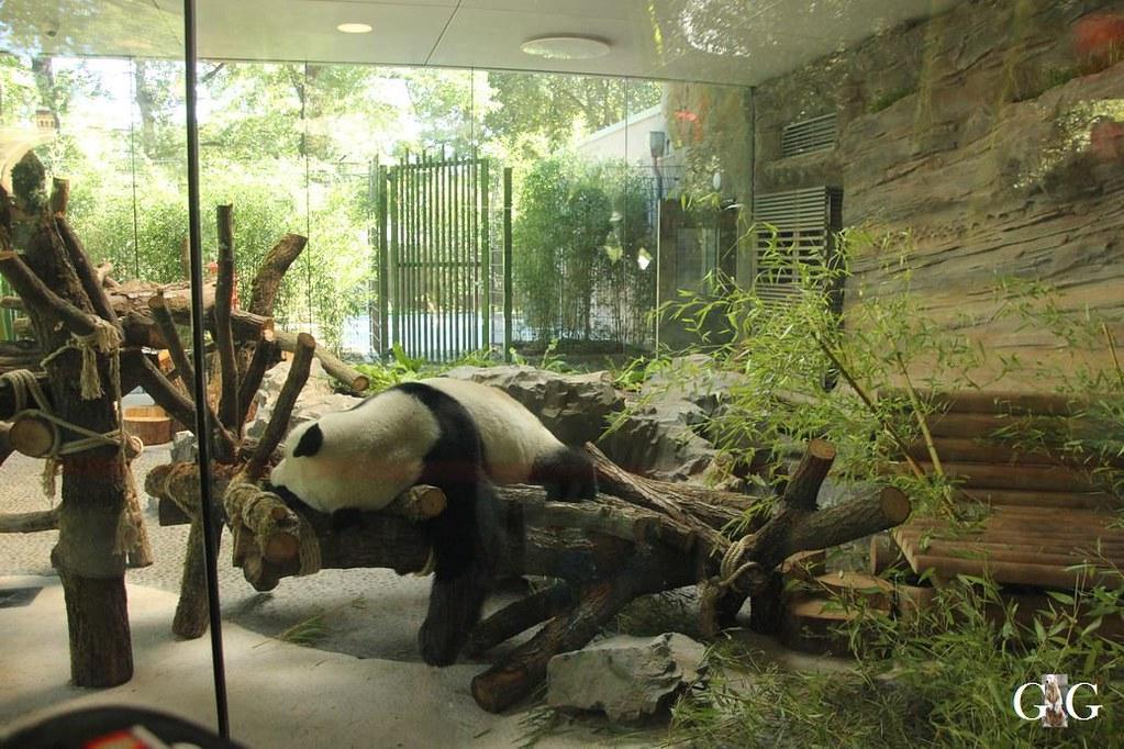 Besuch Zoo Berlin 07.08.201719