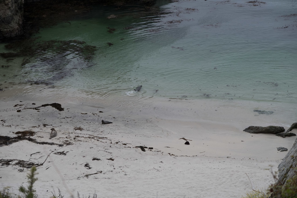 Otters on China Beach | Point Lobos State Reserve