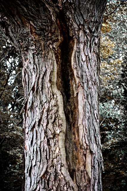 MtAuburntree26b