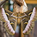 Small photo of Ailanthus Silkmoth