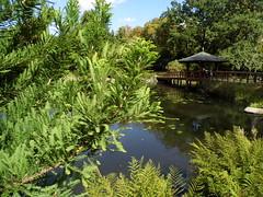 Japanese Garden, Wrocław. Part 2.