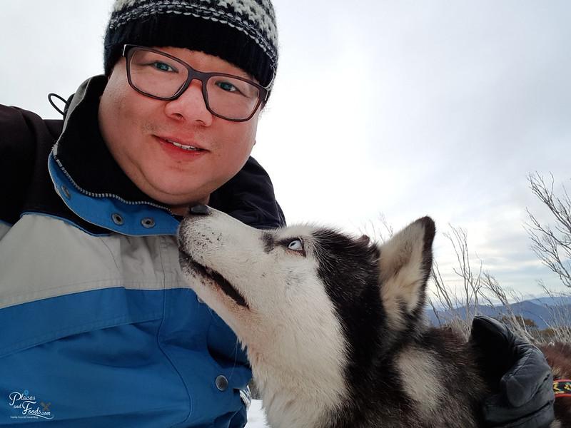 mount buller husky selfie