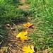 Fallen Footsteps