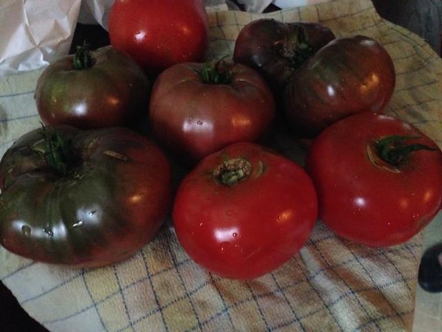 Tomato Harvest 2017