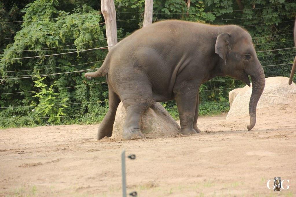 Besuch Zoo Berlin 13.08.172
