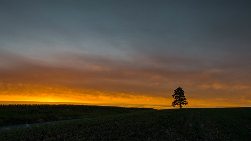 landscape sunrise tree dayton washington unitedstates us