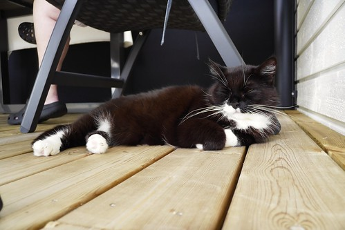 Tussi takes it easy in the patio...