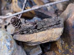 Layered shale