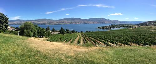 Kelowna Wine tour vinyard
