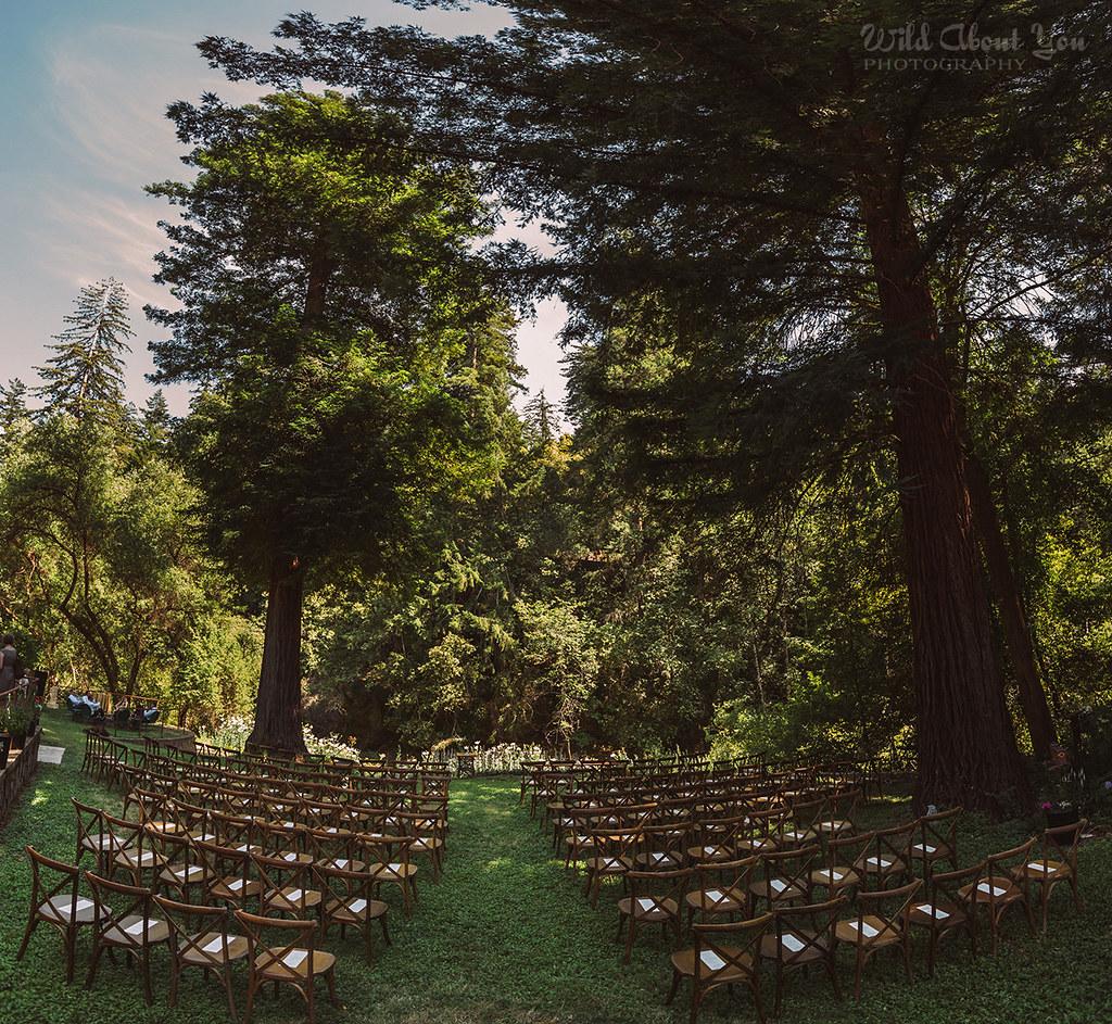 redwoodwedding041