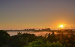 Misty sunrise in the jungle