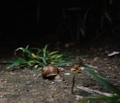 Midnight Visitor